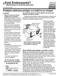 How to say seat belt buckle in spanish